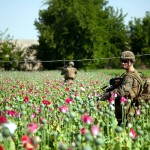 Афганистан широко торгует наркотиками под присмотром НАТО